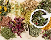 Predavanje zdravilna zelišča