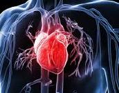 naravno do zdravega srca in ožilja